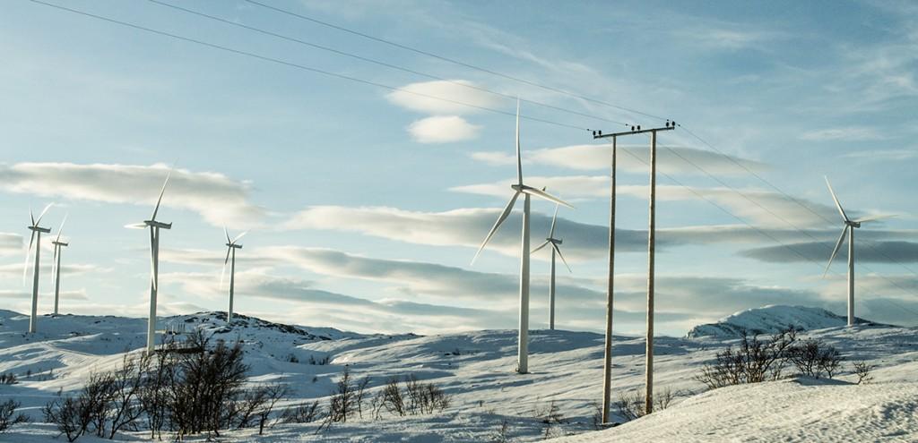 vindkraftverk, fågeldöd, norge, sápmi