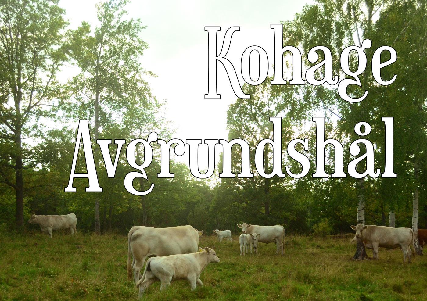 Kohage_liten