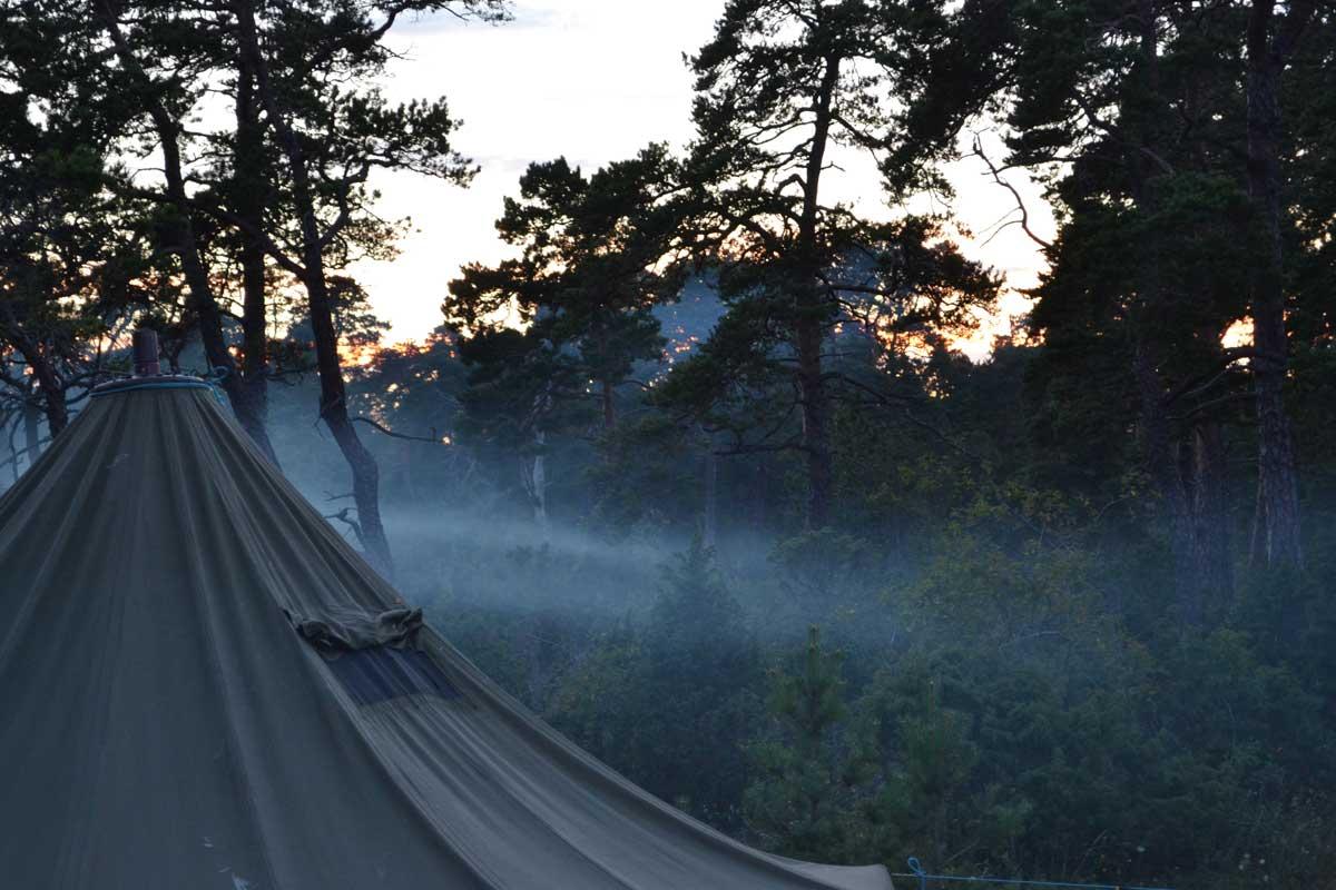 Ett tält som står i en tallskog.